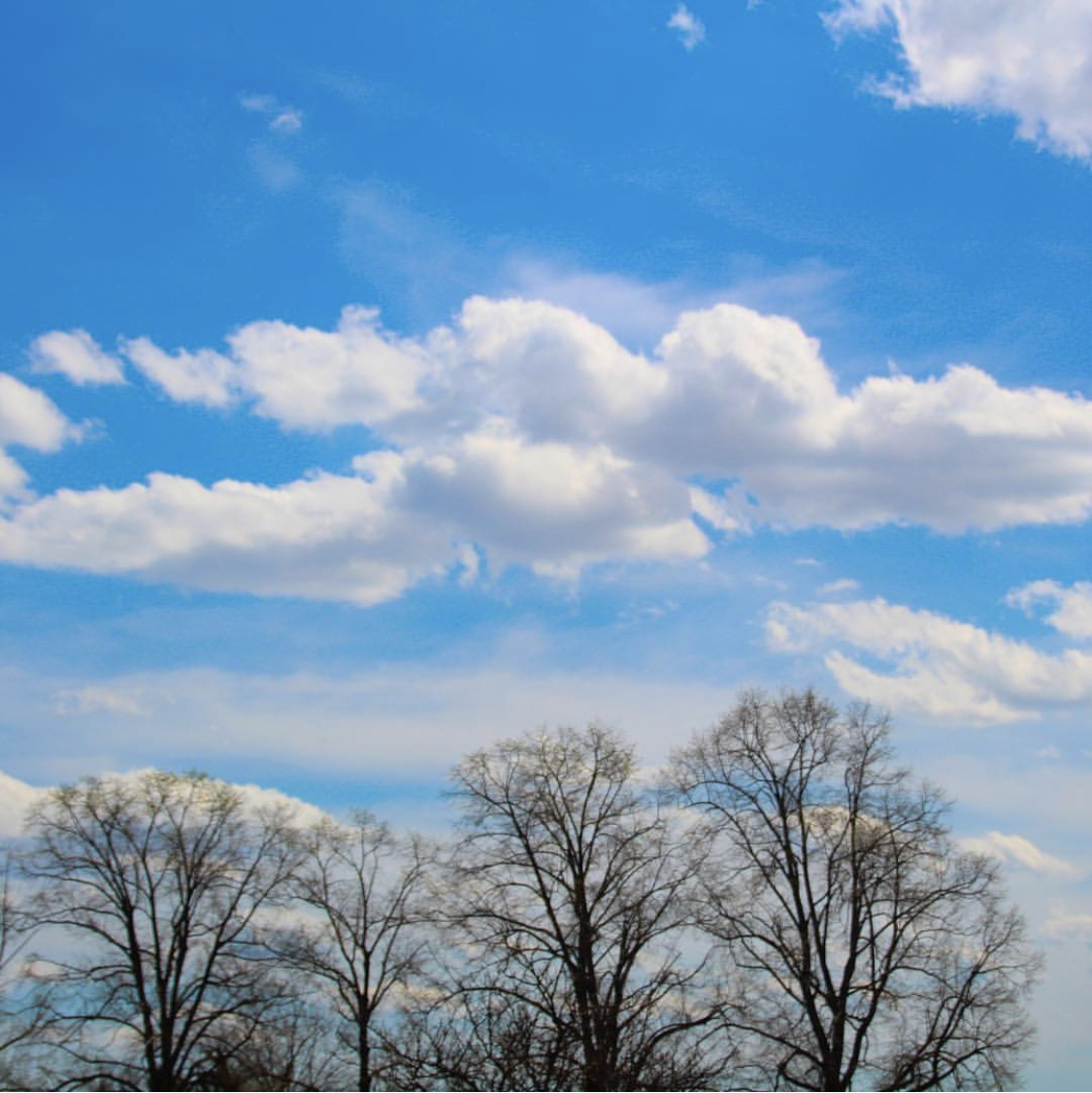 clouds and tress